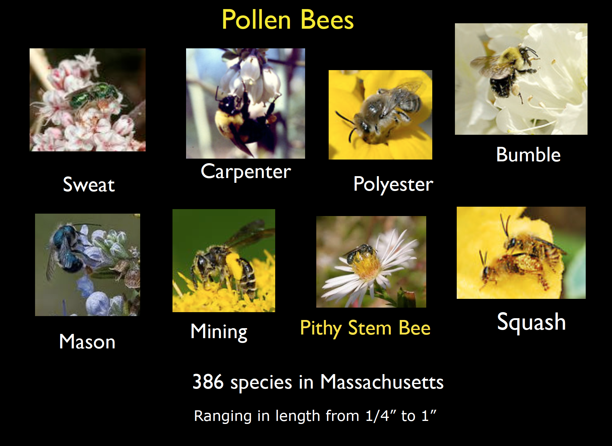 """Attracting Pollinators to Your Garden"""" Lecture – Groton"""